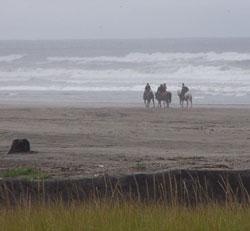 LongBeach_horses