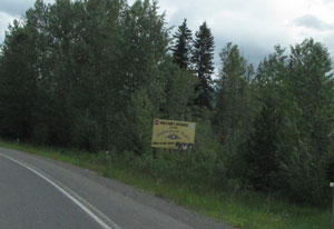 Yellowhead14