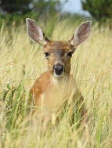 DeerMe6