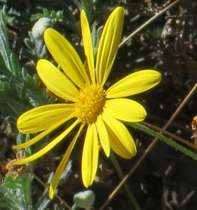 Bloomin1