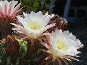 Bloomin10