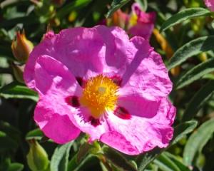 Bloomin6