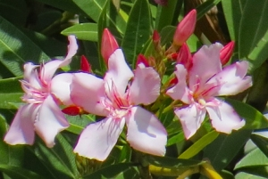 Bloomin8